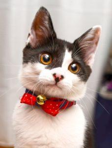 猫好きカップル必見!猫ウェディング演出